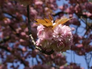 https://latelierphoto.clubandrebaillon.be/files/gimgs/th-132_fleurs-de-cerisier.jpg